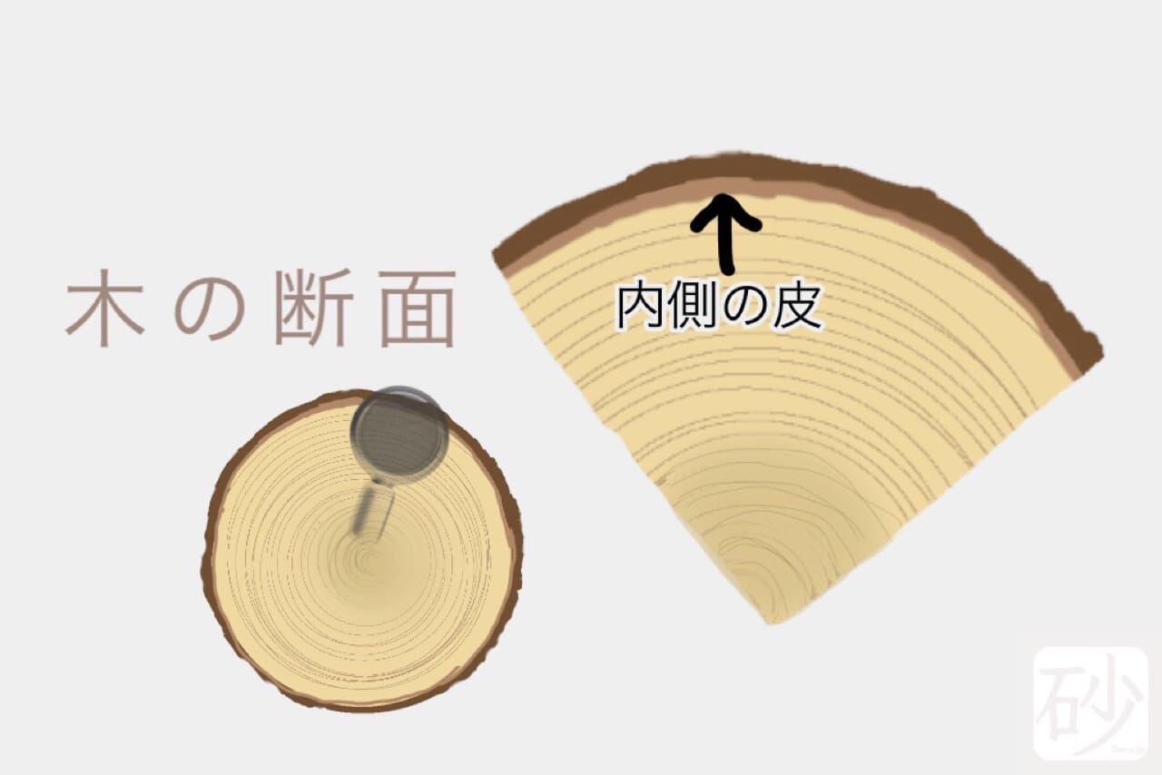 木の内樹皮